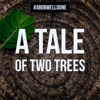 A Tale Of Two Trees Intro: The Day I Didn't Shower